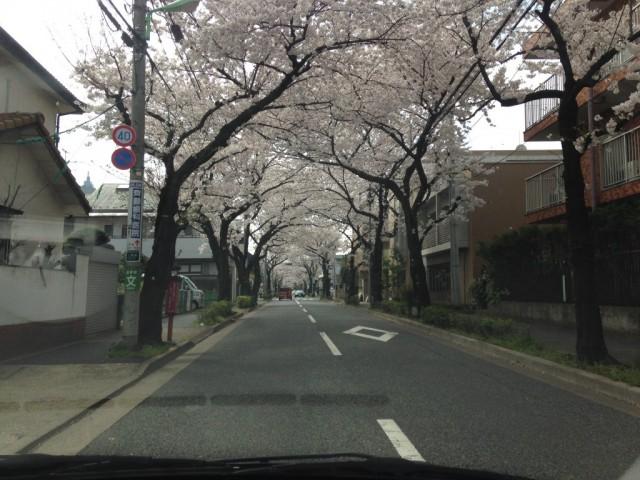2014.04.01-sakura